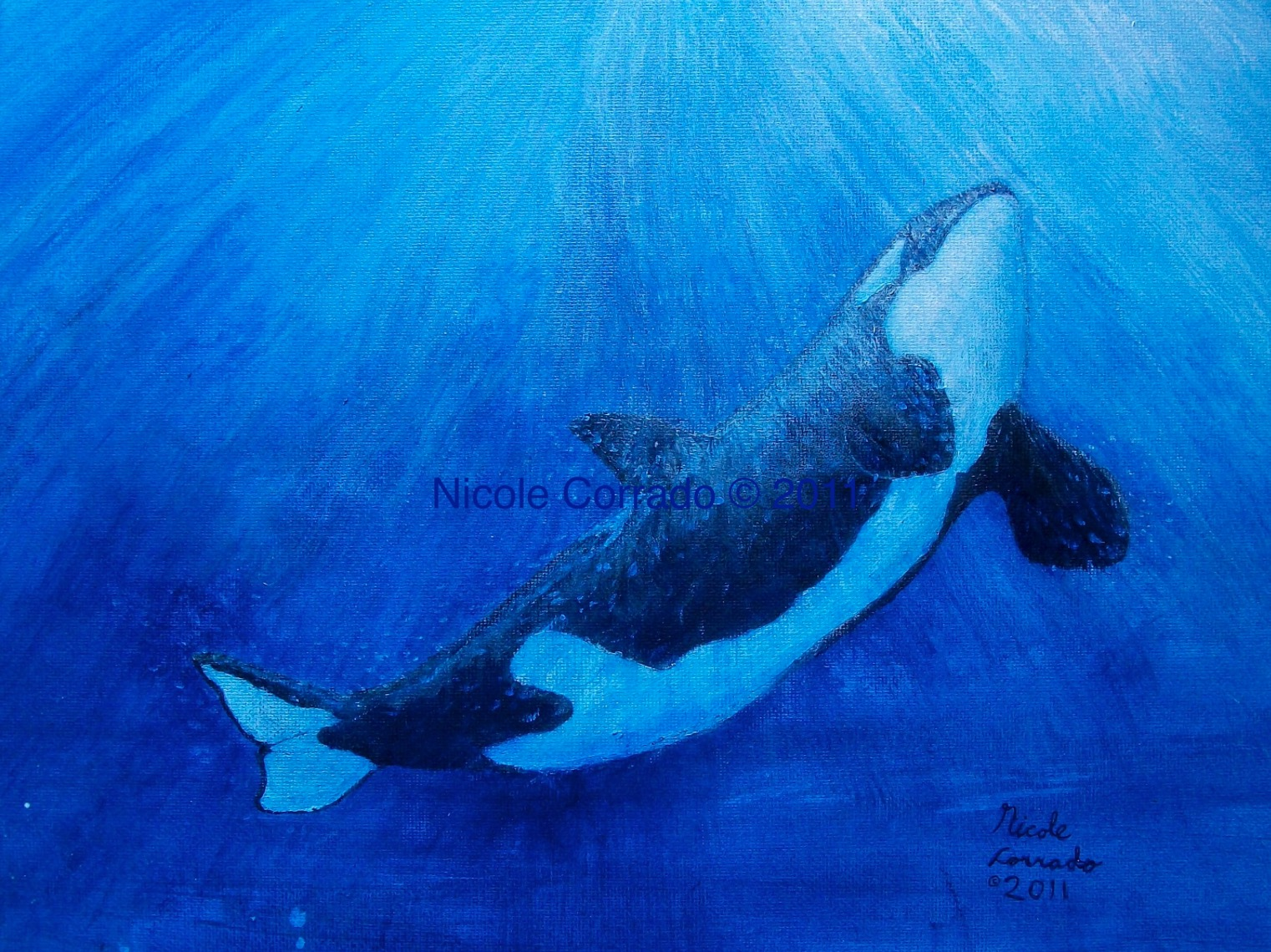 """The """"Orca"""" portrait shows an orca painted in acrylic swimming toward the surface. The water is dark blue, with light blue and white sun rays shining down."""